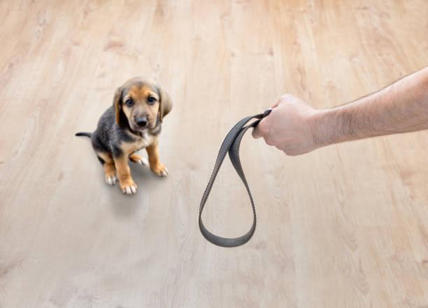Scared dog threatened stock photo