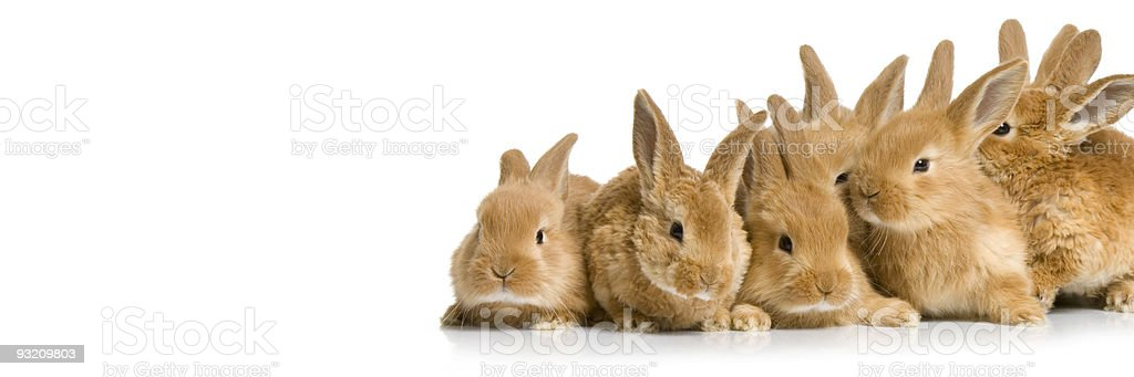 Scared group of bunnies stock photo