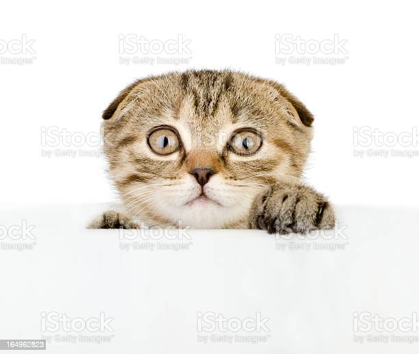 Scared kitten looking out because of the poster picture id164962823?b=1&k=6&m=164962823&s=612x612&h= yv zankb7p6ez9v kekqniylxyqagwjbaa7zqgxbci=