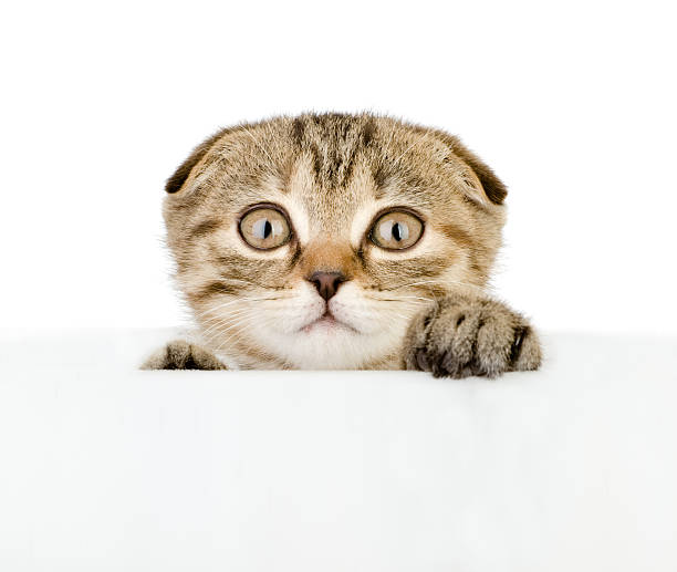 Scared kitten looking out because of the poster picture id164962823?b=1&k=6&m=164962823&s=612x612&w=0&h=tt86dt0sll7y8pfyd7sl8q jkfekiwmfyo7d ldjvxq=