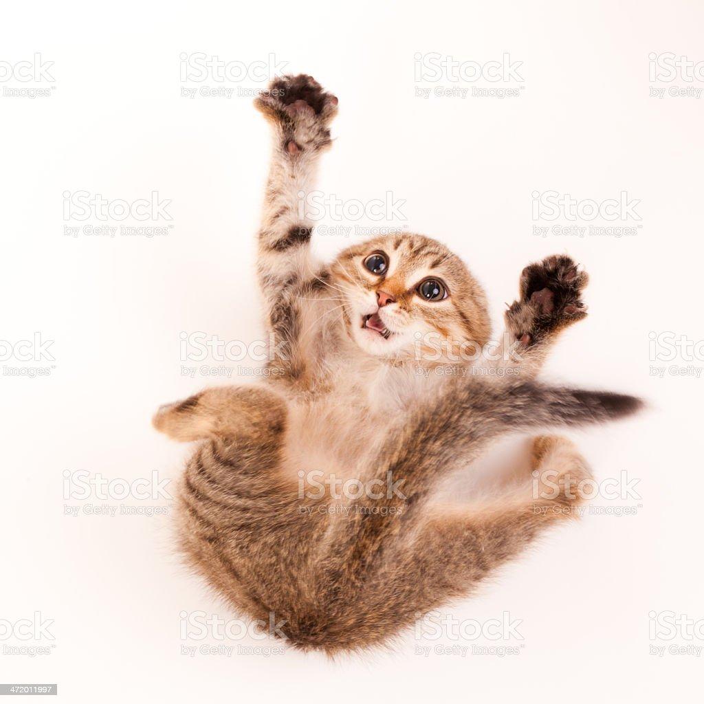 Scared kitten stock photo