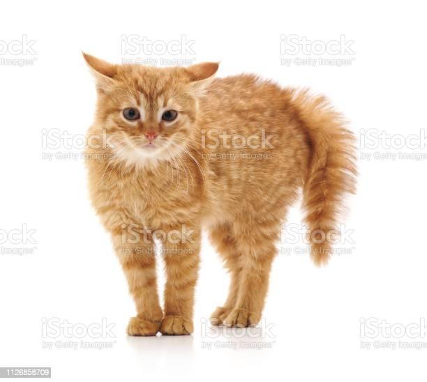Scared little kitten picture id1126858709?b=1&k=6&m=1126858709&s=612x612&h=bfbwdffejqd59ryc3vepqsjgqykunibu8fhfyxrhtbi=