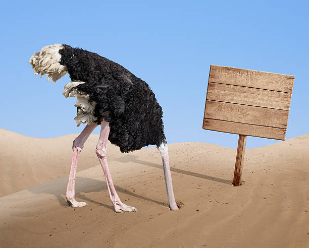 scared ostrich burying head in sand near blank wooden signboard - struisvogel stockfoto's en -beelden