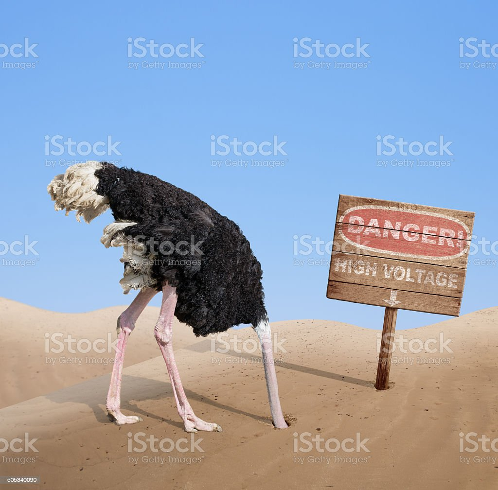 scared ostrich burying head in sand under danger sign stock photo