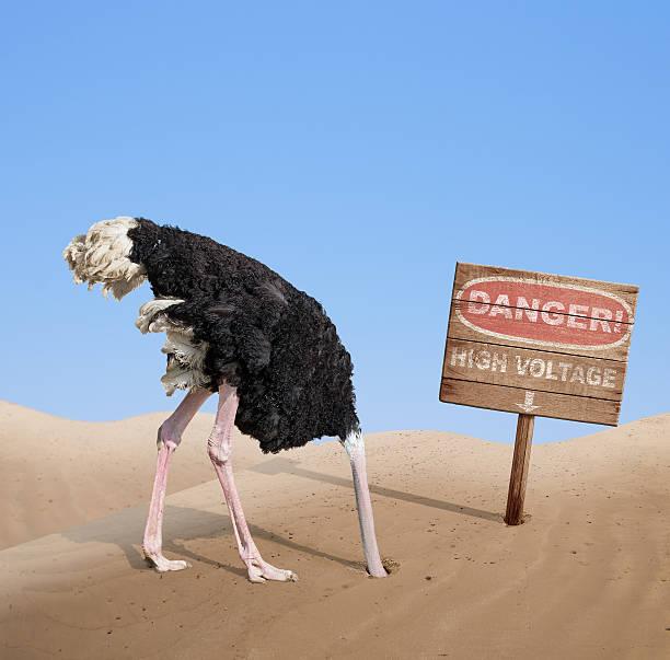Asustada avestruz cabeza en la arena bajo peligro de señal - foto de stock