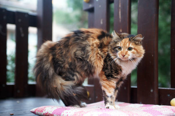 scared stray cat scared homeless stray  cat scared cat stock pictures, royalty-free photos & images