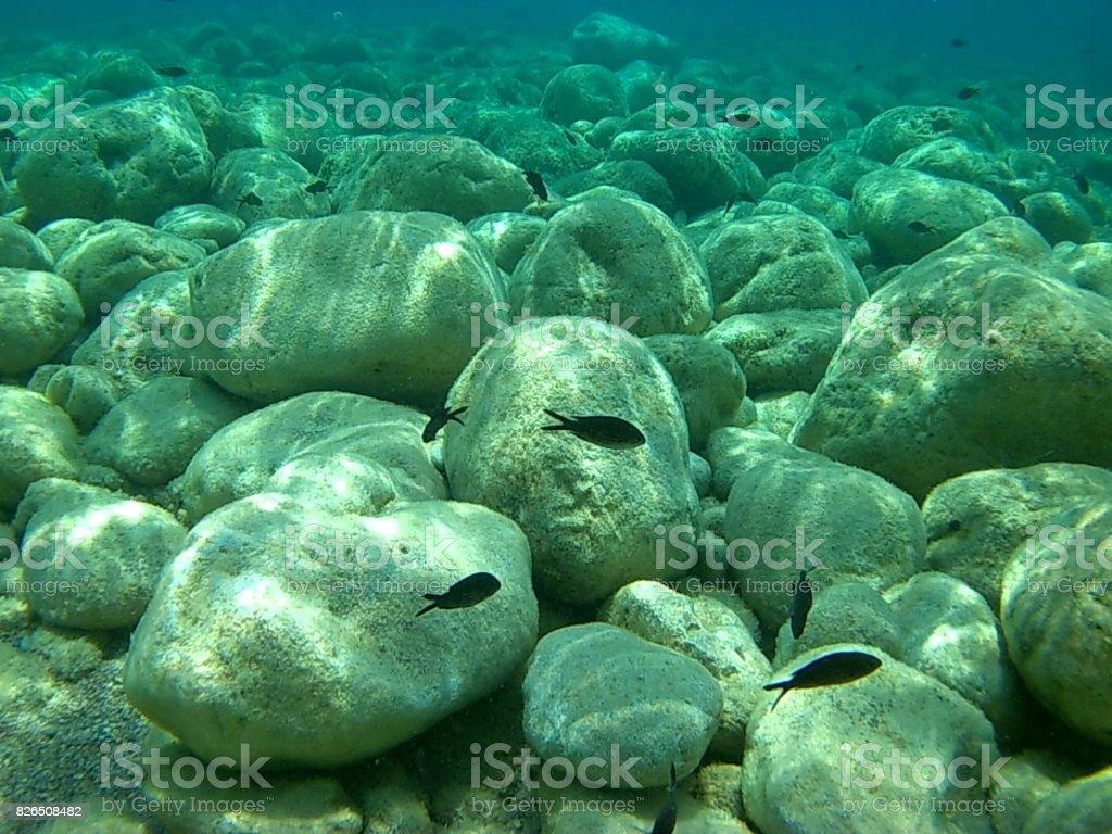 Scario - Pesci neri sul fondale di pietre stock photo