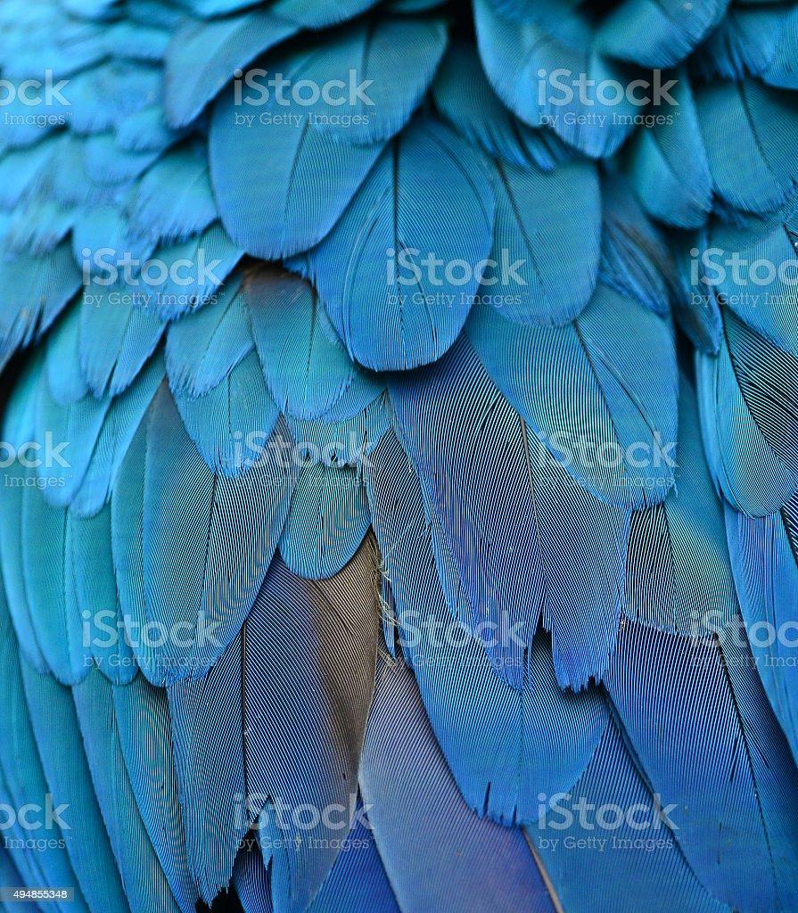 Araracanga penas, textura de fundo colorido - foto de acervo