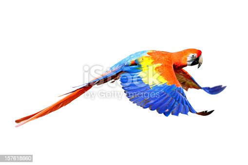 A red scarlet macaw (Ara macao) in flight isolated on white background.