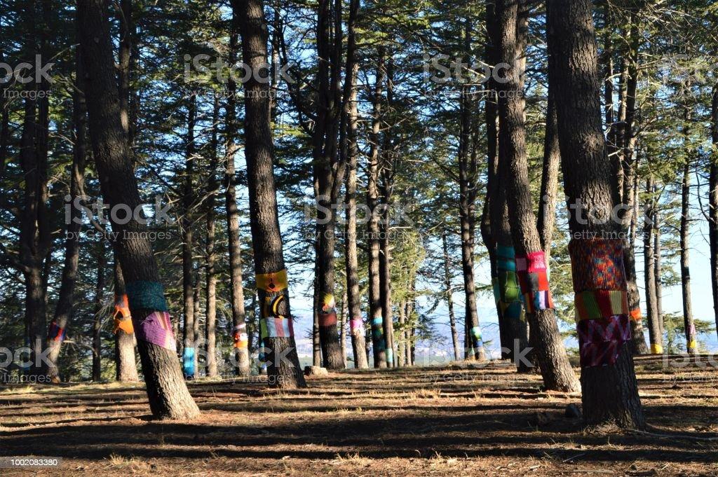 Scarves on trees stock photo