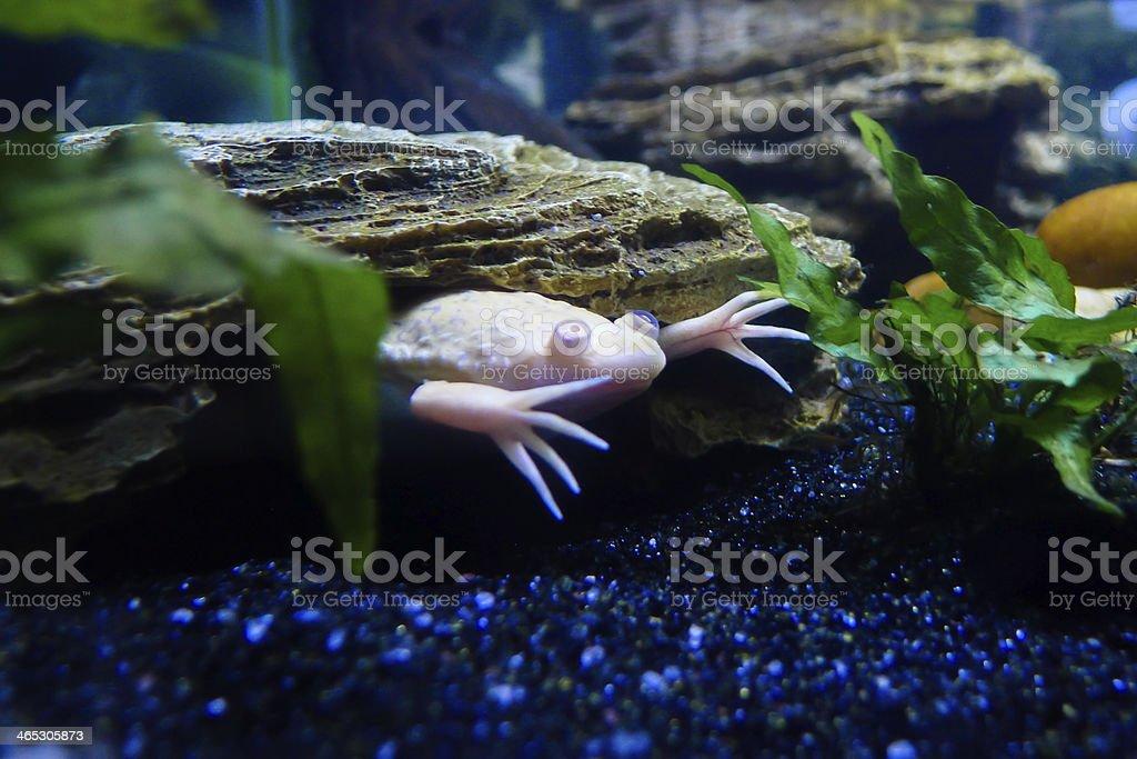 Scary anfibio - foto de stock