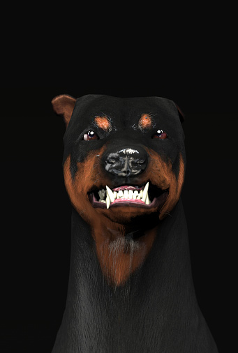 Scary And Angry Doberman Head Shot Growling 3d ... - photo#39