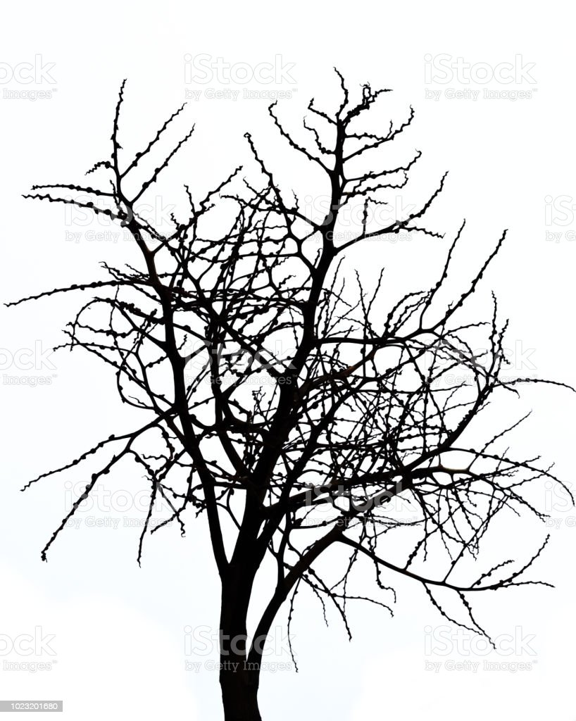 Scary Bare Black Tree Silhouette Stock Photo Download Image Now Istock