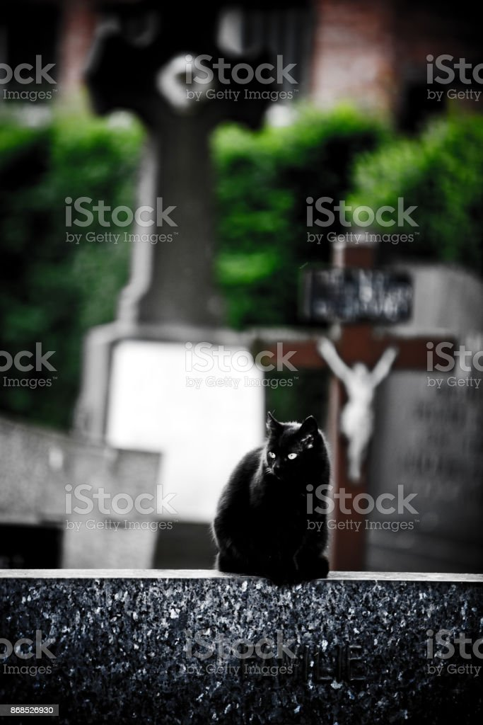 Scary black cat on a cemetery sitting on the tomb stone stock photo