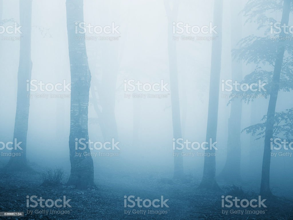 Scary blue cold fog into the forest stock photo