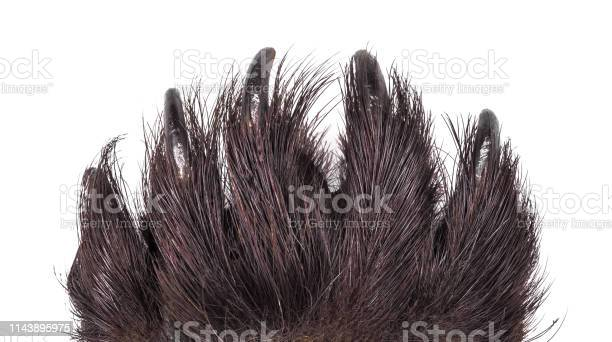 Scary claws of an animal monster and werewolf on a white isolated picture id1143895975?b=1&k=6&m=1143895975&s=612x612&h=0rgx3xywwpqyn2x9w7np05bu 6m6 xuz6kyelrfifcy=