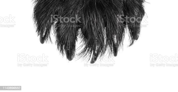 Scary claws of an animal monster and werewolf on a white isolated picture id1143896552?b=1&k=6&m=1143896552&s=612x612&h=m8qnwz8jtsbrlr jqyaotpzaxu5ybd ju gjgcglpla=