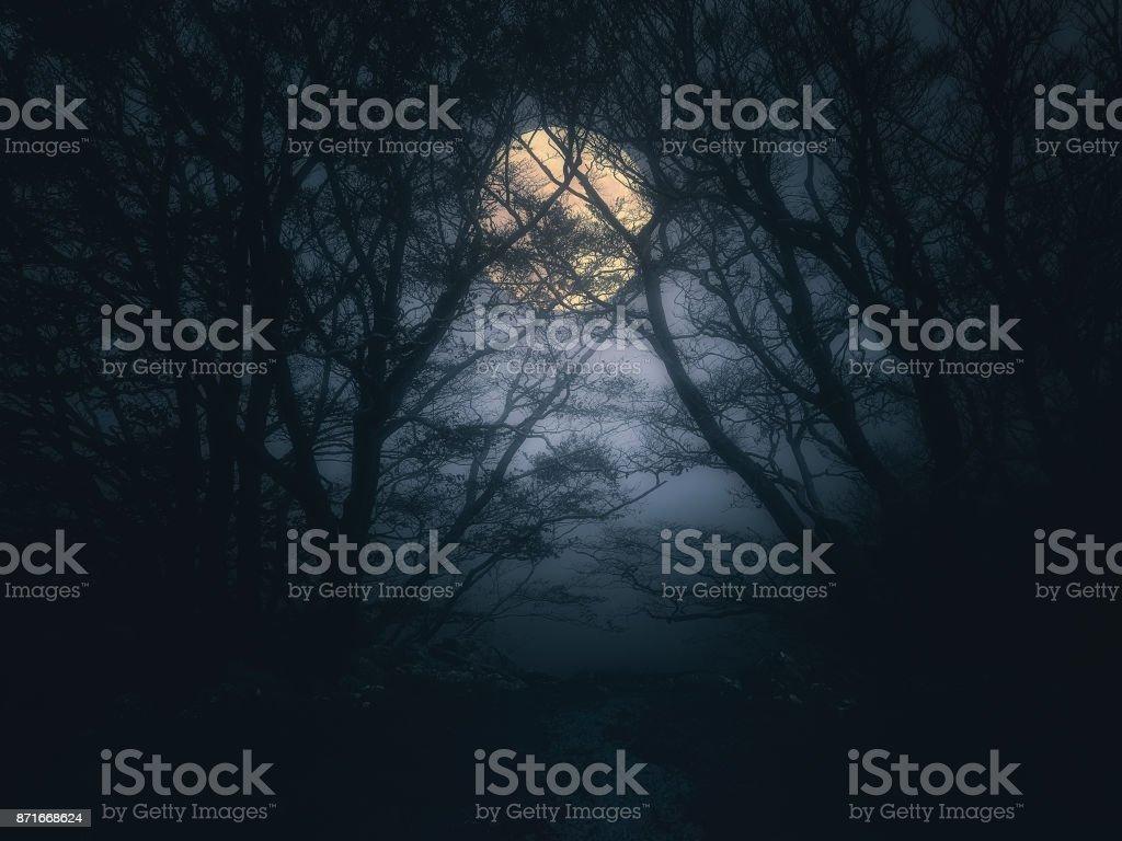 bosque de miedo en la noche con luna llena - foto de stock