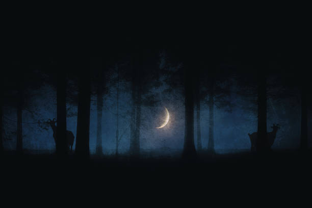scary forest at night with moon and goats stock photo