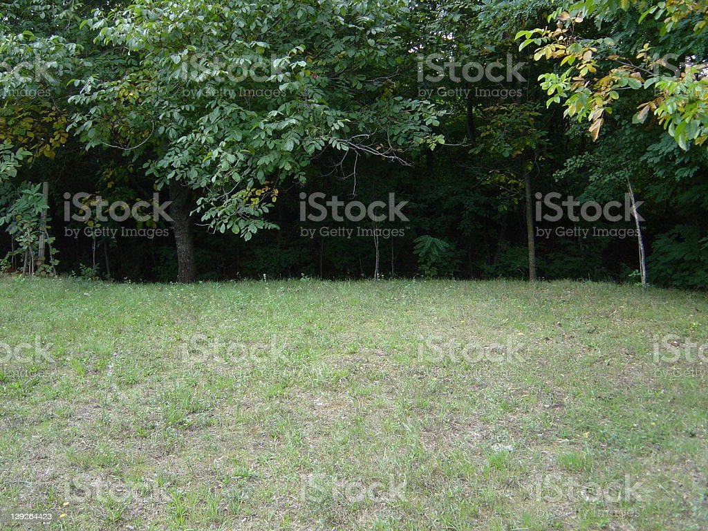 scary forest stock photo
