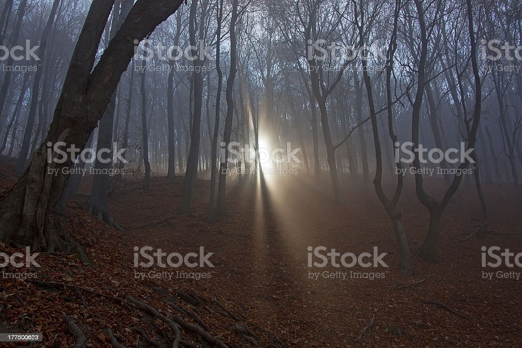 Scary forest royalty-free stock photo