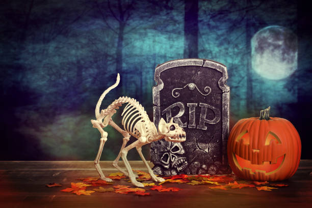 scary halloween skeleton cat with tombstone scary halloween skeleton cat with tombstone on wood table cat skeleton stock pictures, royalty-free photos & images