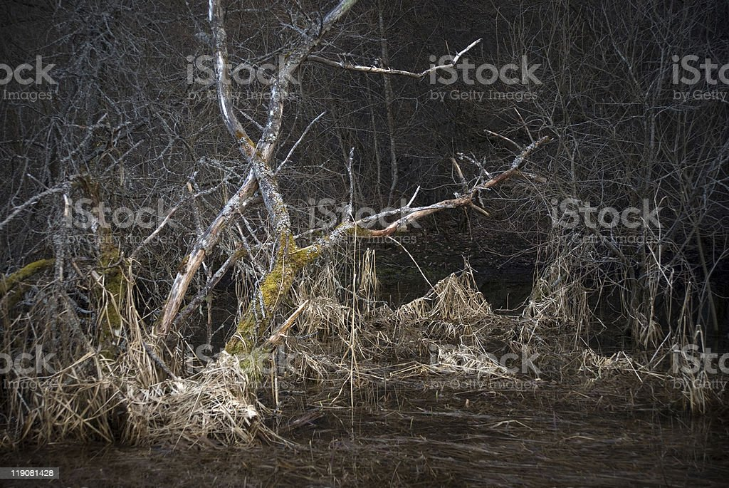 Scary landscape with dead tree royalty-free stock photo