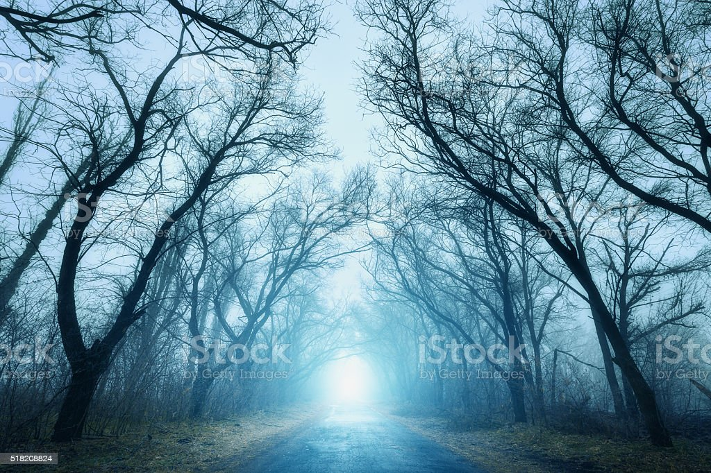 Scary mysterious forest with road in fog in autumn The road passing through scary mysterious forest with blue light in fog in autumn. Magic trees. Nature misty landscape Autumn Stock Photo
