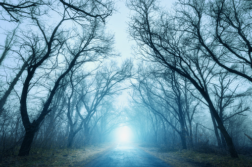 Scary Mysterious Forest With Road In Fog In Autumn Stock Photo - Download Image Now