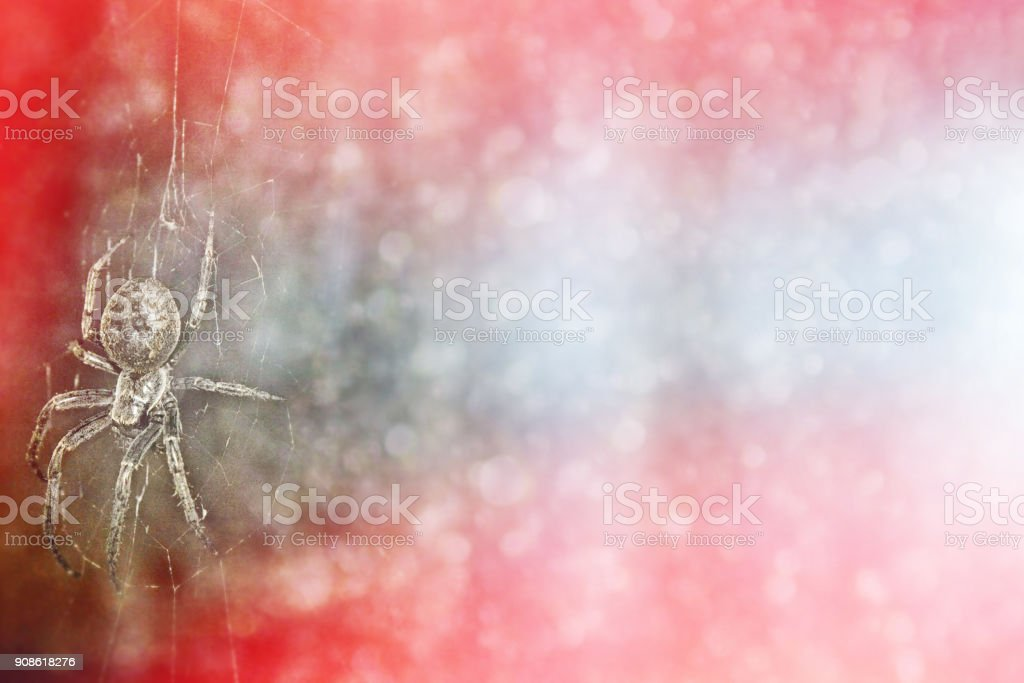 Scary spider in the web. Halloween. stock photo