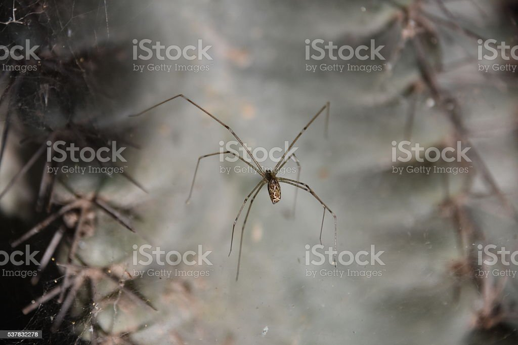 Scary Spider stock photo