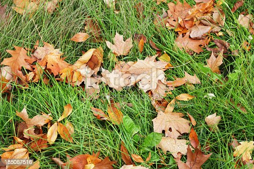 A large, varied group of fallen multi-colored autumn leaves scattered in tangled grass after a rain shower.