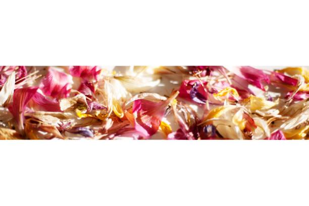 Scattered colored flower petals border on blurred background close up picture id1140894125?b=1&k=6&m=1140894125&s=612x612&w=0&h=hbjvjqibxgga u a46vo5kpkb5oew8a1275h5txjuma=