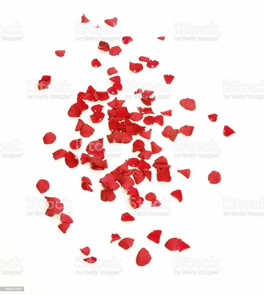 Scattered Petals royalty-free stock photo