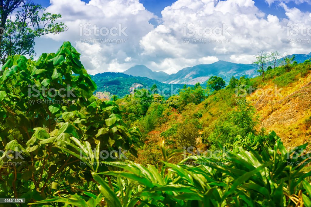 scene of India with hills, green plantations cardamom and blue sky, Kerala, Munnar, India stock photo