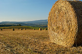 Scene with hay rolls on meadow.
