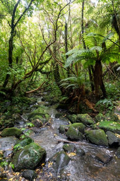 Scenery along Matai Falls Walk in New Zealand