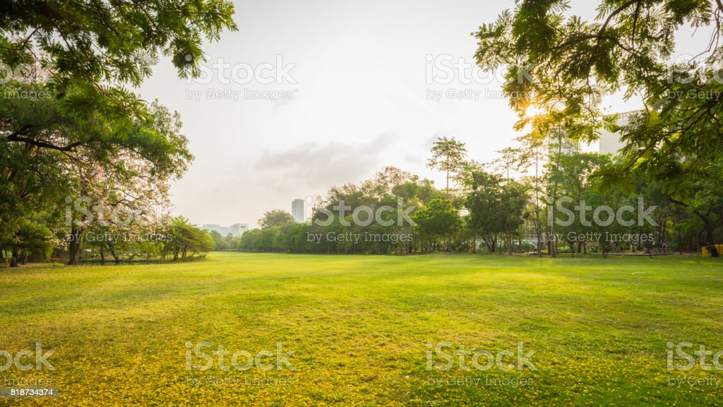 Scenery green park and meadow in morning with urban stock photo