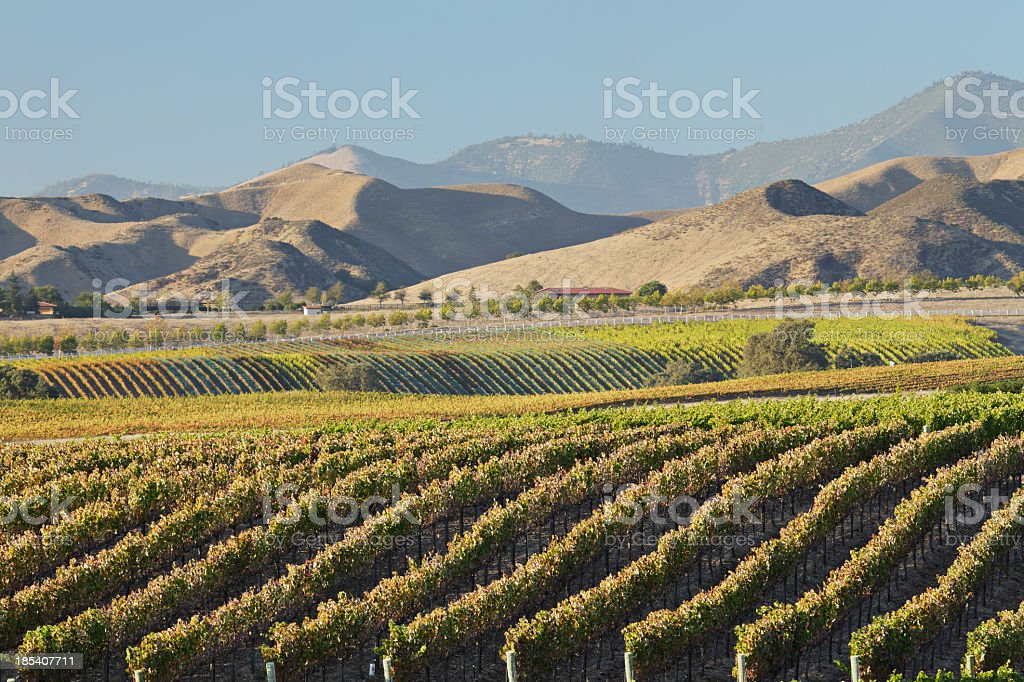 Scenery of a wine country with mountains far ahead royalty-free stock photo