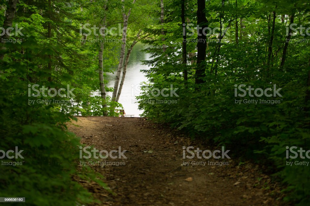 Scenery of Forest trail leading to a lake stock photo