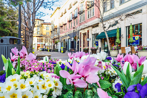 scenery of the flower bed in the street - downtown stock photos and pictures