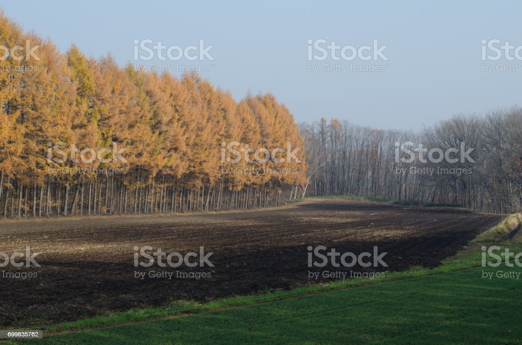 Scenery of windproof forest stock photo
