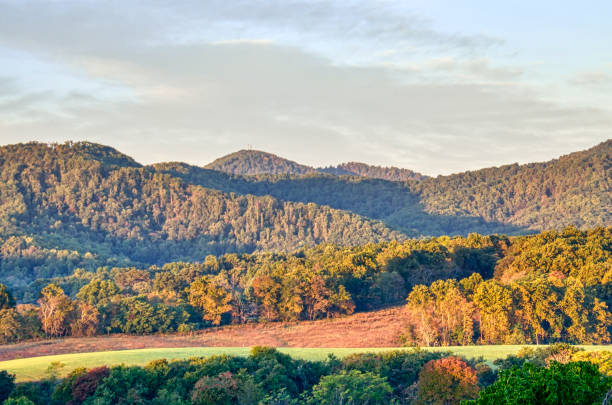 Scenery, scenic landscape of vineyard hills, winery, Appalachian mountains, forest in autumn, flowers during sunset, early morning in Virginia Scenery, scenic landscape of vineyard hills, winery, Appalachian mountains, forest in autumn, flowers during sunset, early morning in Virginia charlottesville stock pictures, royalty-free photos & images