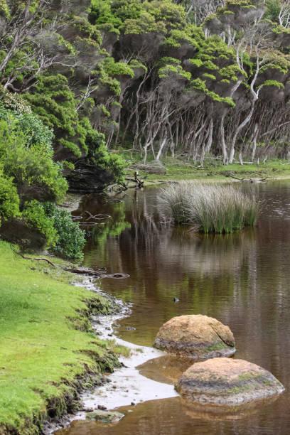 landschaft tidal river tee bäume - own wilson stock-fotos und bilder