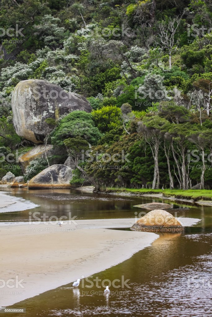 Scenery Tidal River with silver gulls in front and tee trees stock photo