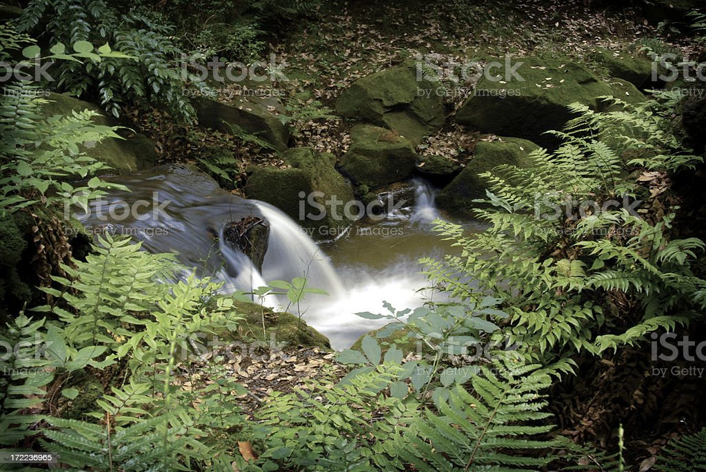 Scenes in a Japanese Forest stock photo