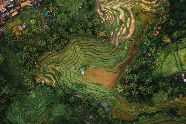 Scenic aerial view of Tegallalang rice field on Bali, Indonesia stock photo