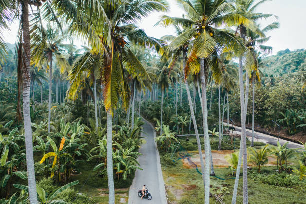 Scenic aerial view of woman driving scooter in the jungles on Nusa Penida stock photo
