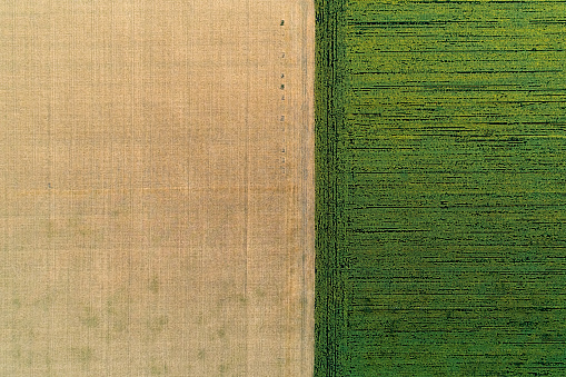 istock Scenic agricultural fields. Aerial view. 1003557324