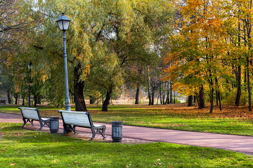 Beautiful romantic alley with benches in autumn park with colorful trees and soft sunlight. Autumn natural background.